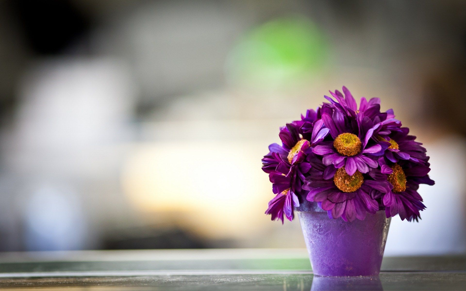 free download Beautiful Purple Daisy Flower Pot Macro