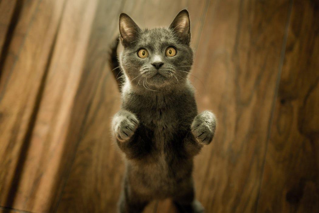 Aus Ganz Vielen Grunden Sind Katzen Wirklich Erstaunliche