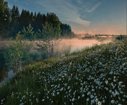 Dream Fields via Magical Nature Tour