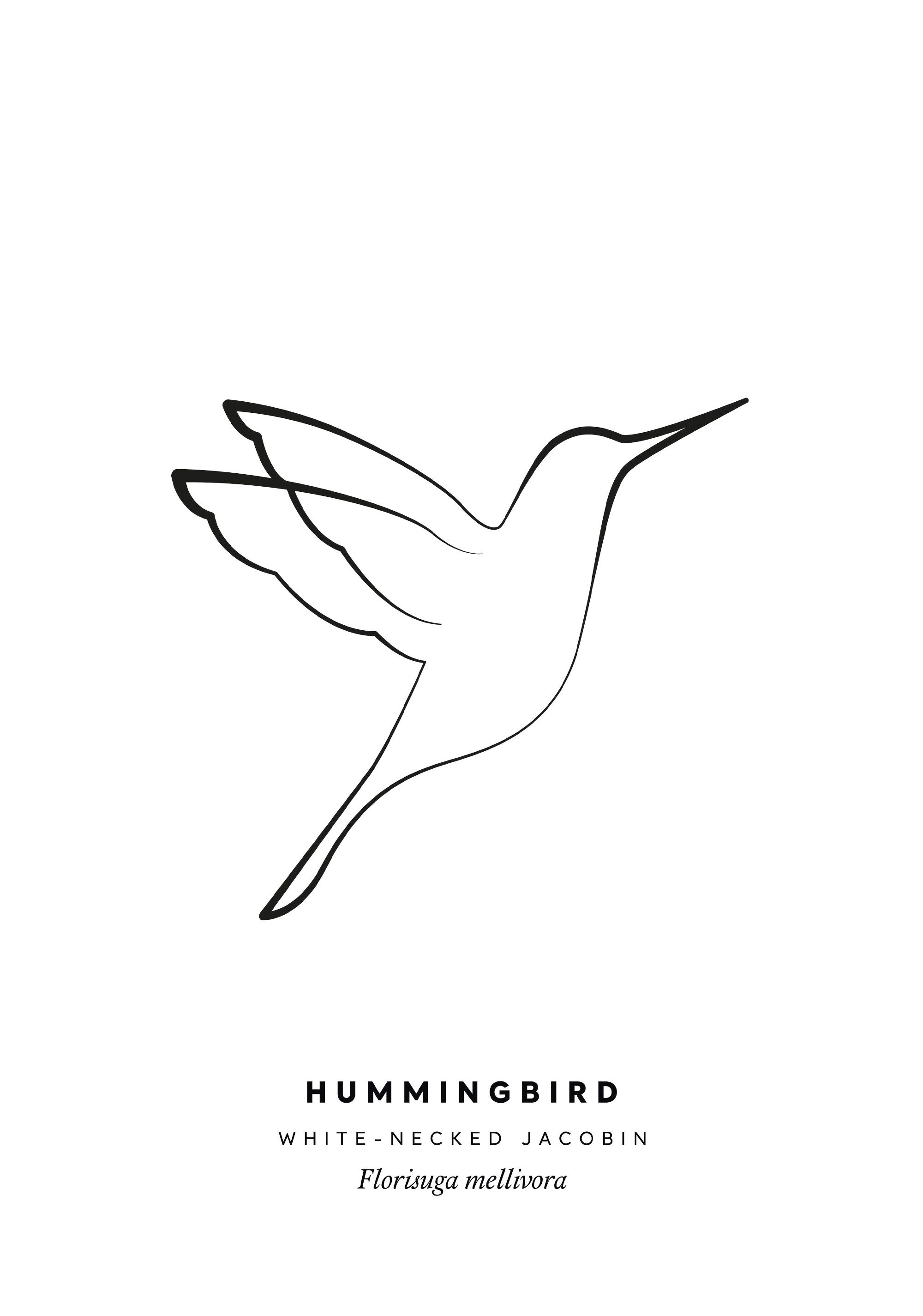 Hummingbird Tattoo Simple : hummingbird, tattoo, simple, Hummingbird, Printable, Single, Drawing, Tattoo,, Tattoo, Black,, Drawings