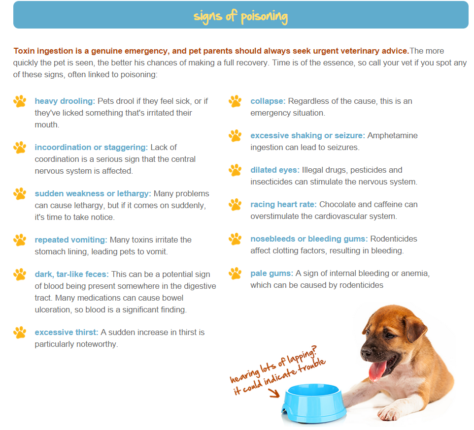 12 Signs Of Poisoning In Pets If You Notice Your Dog Or Cat Experiencing Any Of These Call The Vet Immediately Pets Pet Hacks Pet Poison