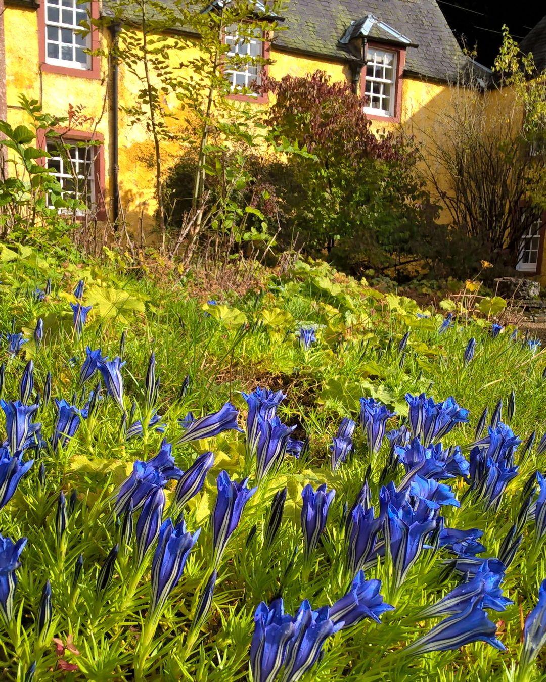 Nie Wiem Jak Te Kwiaty Sie Nazywaja Ale Dzieki Nim Jesien Jest Jeszcze Piekniejsza Szkocja Scotland Mojaszkocja Glenp Instagram Posts Instagram Plants