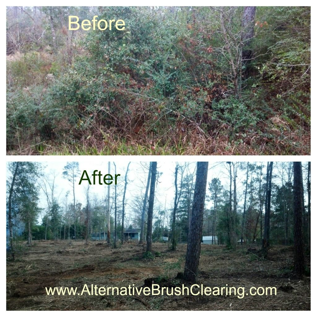 Before and After pictures for our forestry mulcher