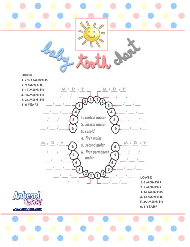 Baby Tooth Chart For Scrapbook Or Just For Keeping Track Of When