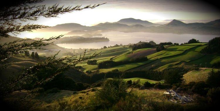 Dunedin, New Zealand home to 126,000 people.