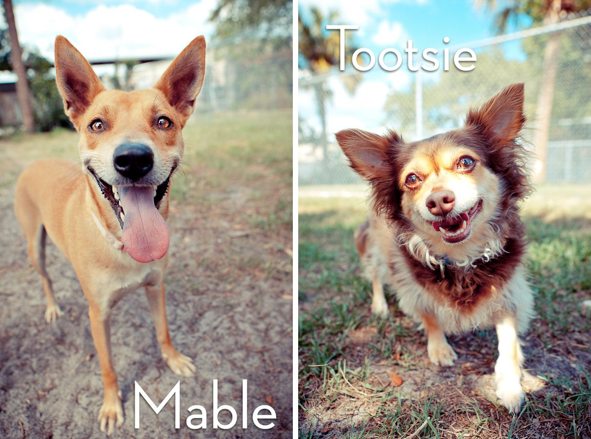 Adoptables From The Humane Society Of Sarasota County In Sarasota