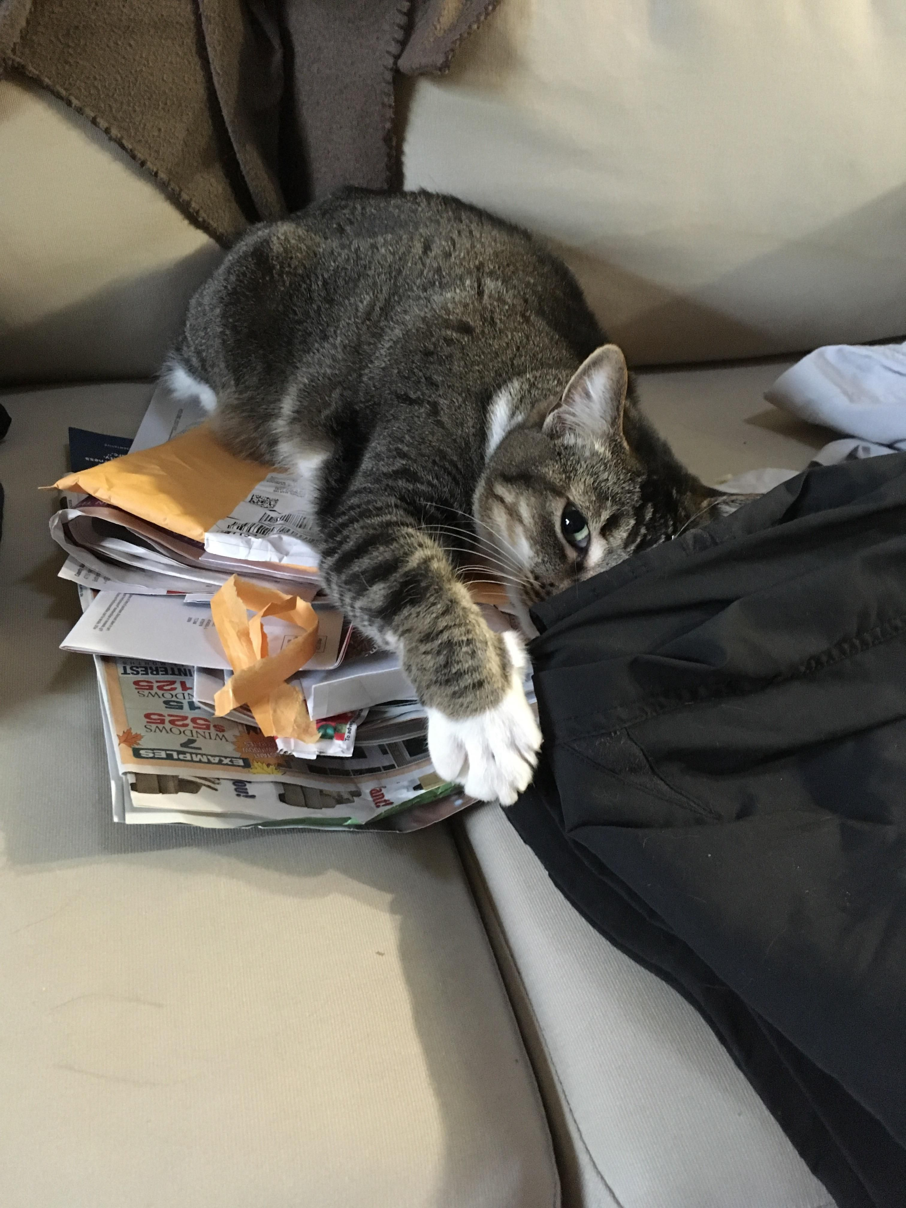 Comfy Mail Bed Cats Cat Lovers Beautiful Cats Pictures