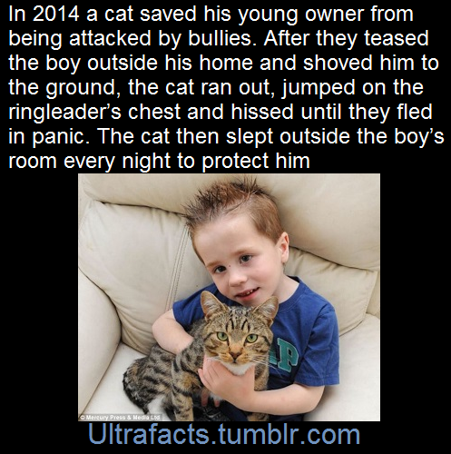 ultrafacts:   The cat's name is Smudge  (Fact...