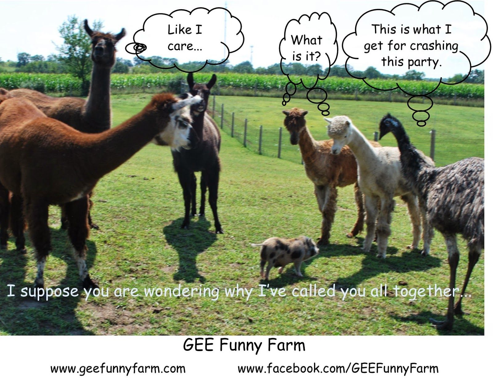 Gee funny farm animal memes funny animal memes animal - Funny pictures farm animals ...