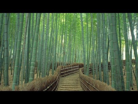 bamboo forest sounds white noise 9 hours yoga sounds