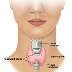 Natural Way To Cure Goiter
