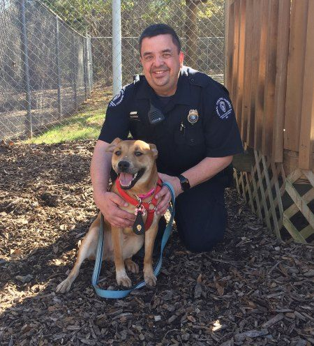 Adorable Dog Follows Animal Control Officers For Help And Lands A New Job With Images Jobs With Animals Dogs Animals