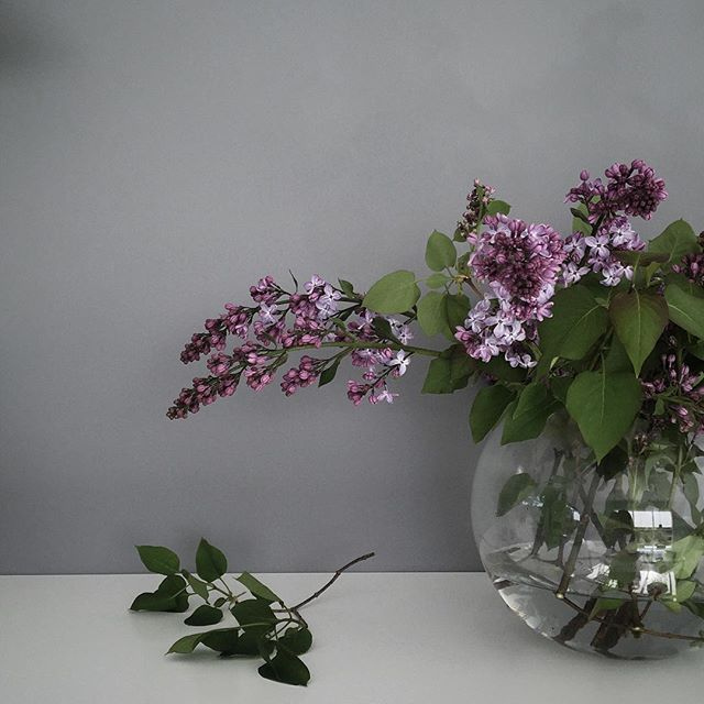 Before work, bringing in lilacs from the garden./ #gardenlove