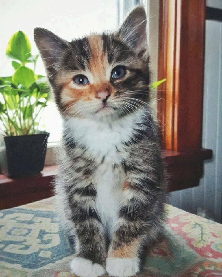 Pin by lisa vecchio on animals cats kittens cutest