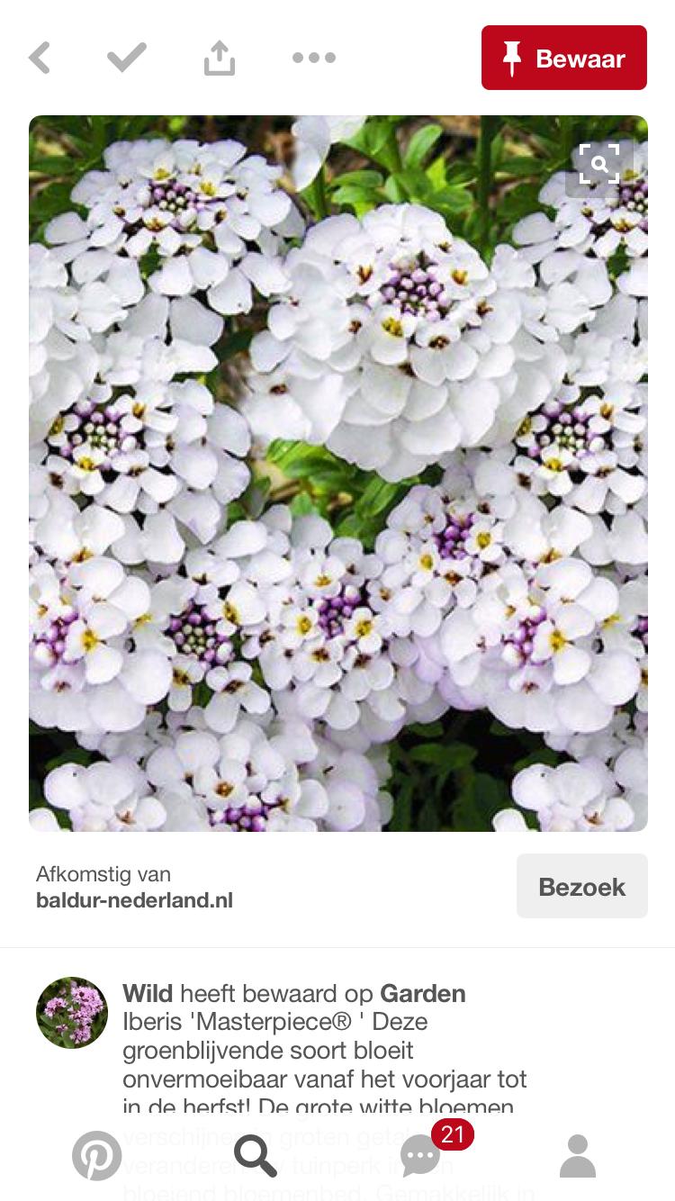 Pin van valérie a. op I PLANTEN I Groenblijvend, Planten