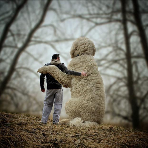 Dieser riesige Hund erobert gerade das Internet. Der Grund ...