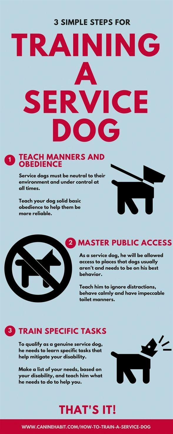 Dog Training Schools Clicker Dog Training Youtube Dog Training