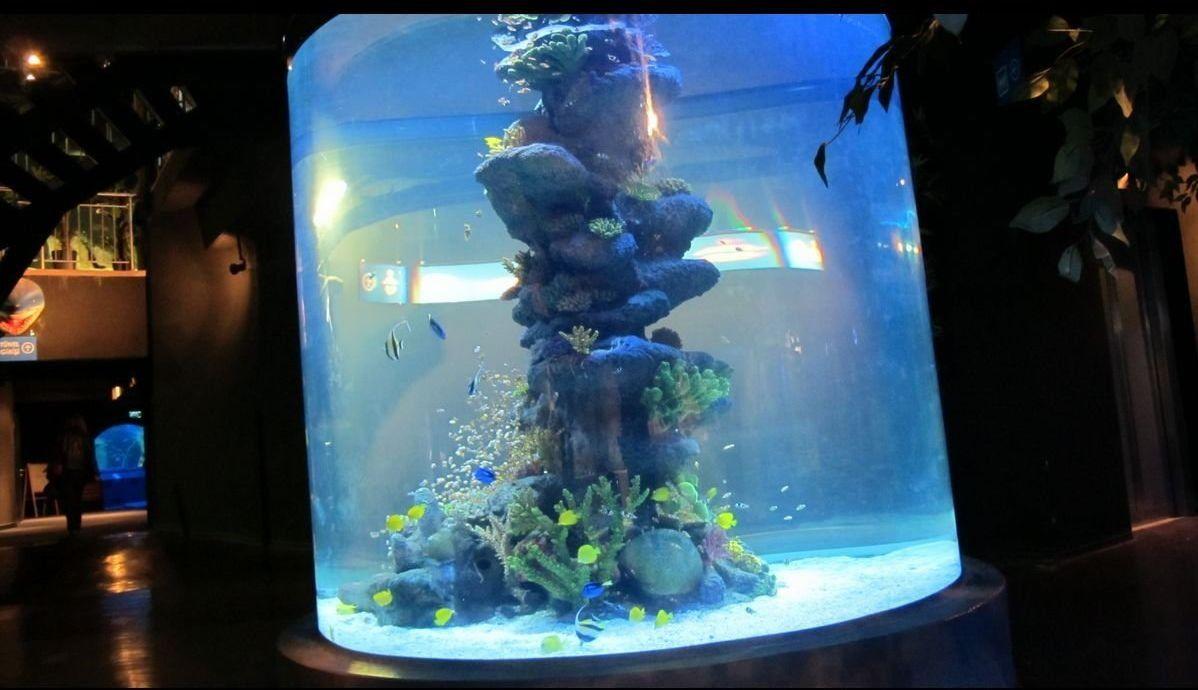 Freshwater aquarium fish ecosystem - Custom Super Large Ecological Aesthetic Acrylic Aquarium