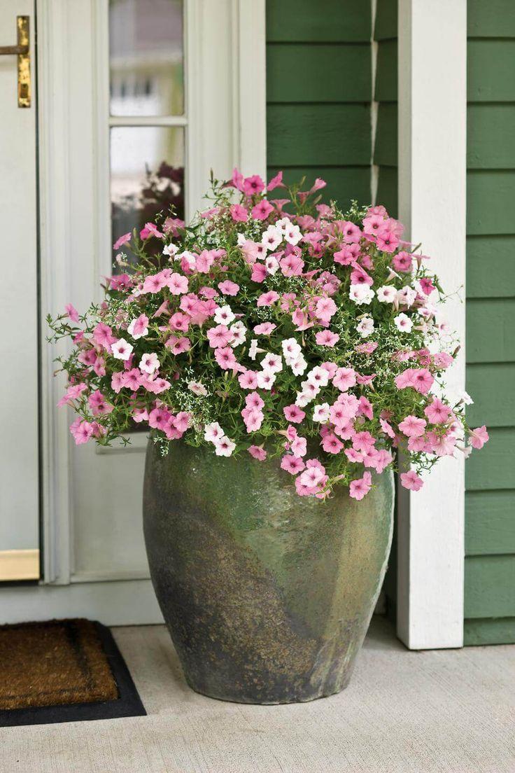 cherry geranium, alyssum, gold-centered vinca vine   mixed ... - Patio Flower Boxes Ideas