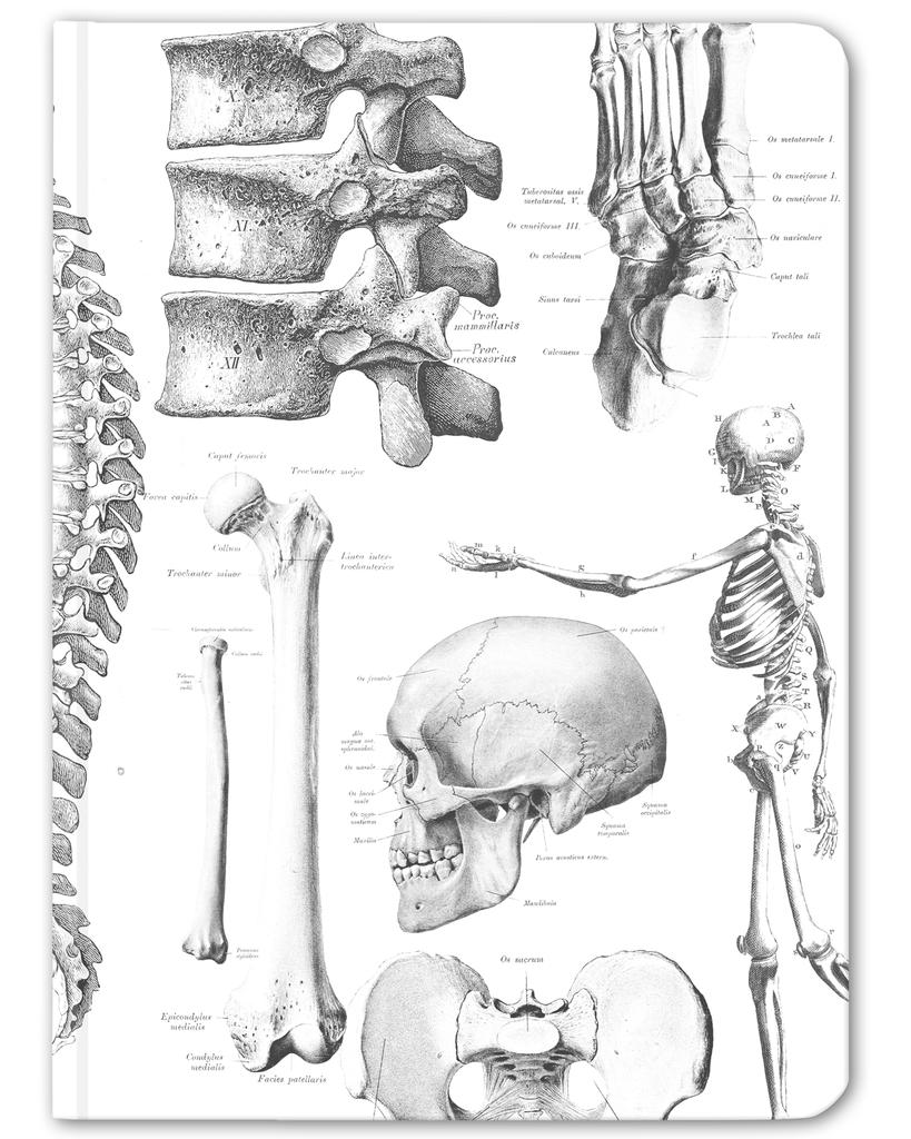 Skeleton Anatomy Hardcover Journal - Lined/Blank