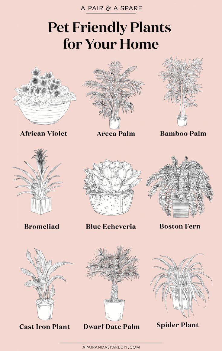 A Pair A Spare The Best Pet Friendly Plants For Your Home Plants House Plants House Plants Indoor