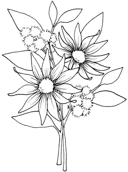 Beccy S Place Flower Coloring Pages Flannel Flower Painting Patterns