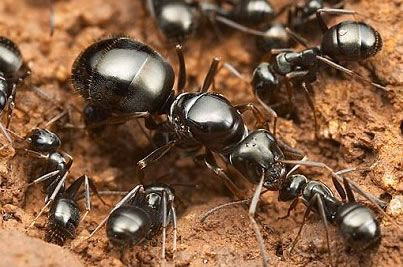 Ant Queen And Workers Queen Ant Ants Ant Colony
