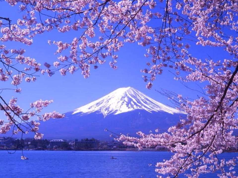 Stand Like Mt Fuji In The Face Of Adversary Mount Fuji Japanese Cherry Tree Sacred Places