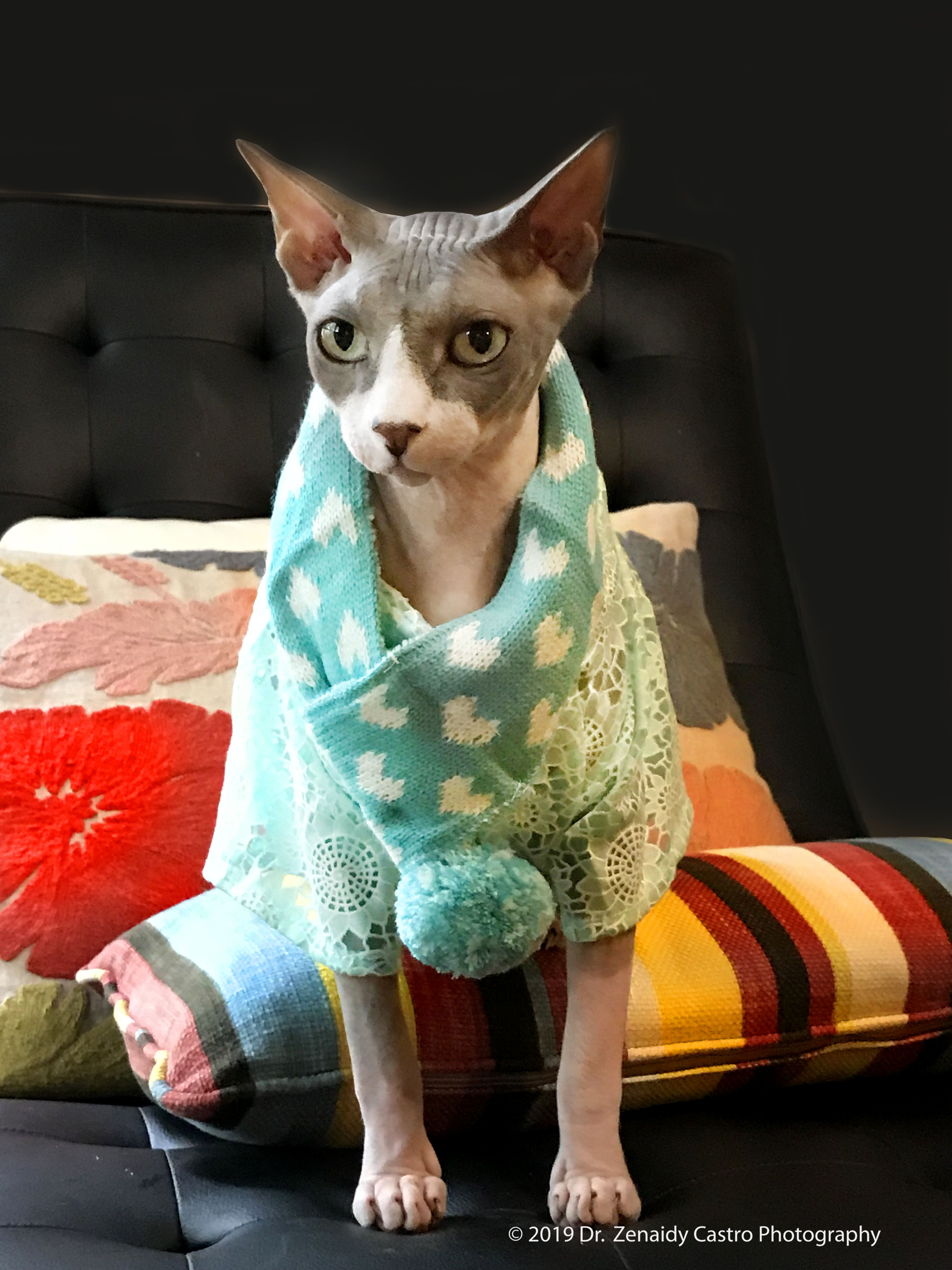 Pin By Dentist In Melbourne Dr Zenaid On Cute Pet Sphynx Cats In Costumes Kittens In Costumes Losing A Dog Animal Society