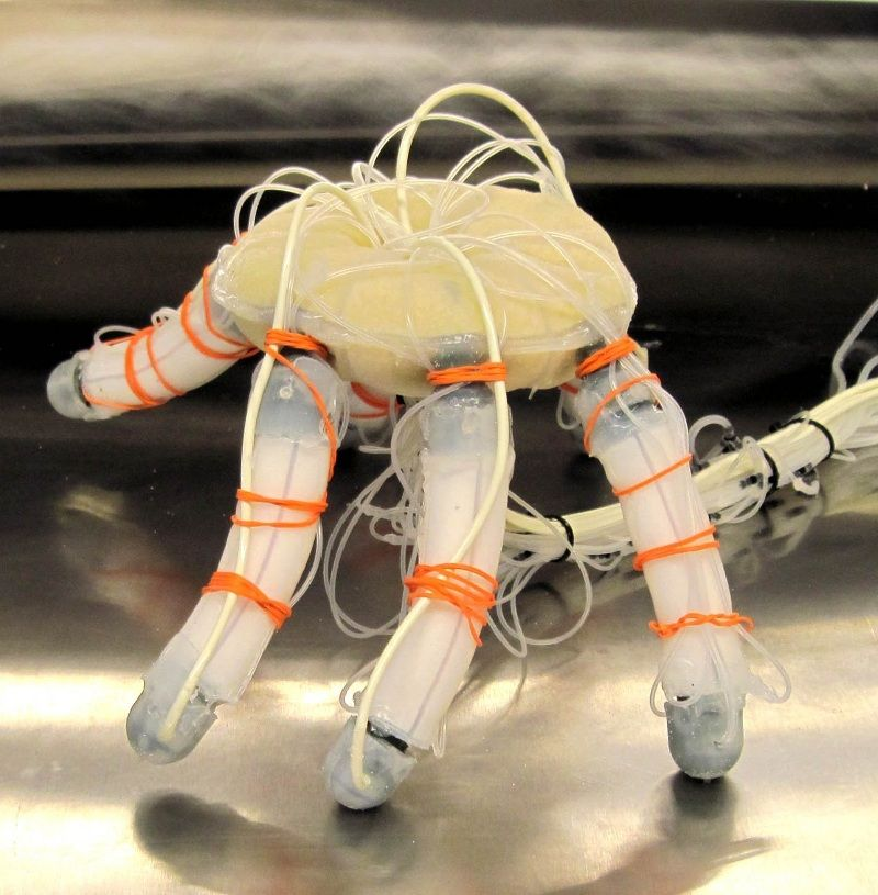 JamBot: A hexapod robot based on particle jamming | hexapods