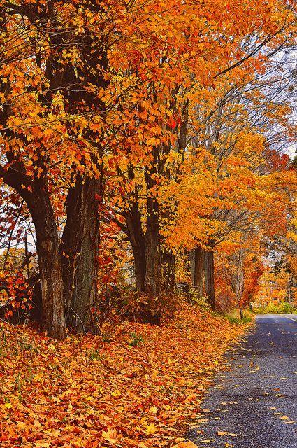 autumn - Google Search | Herbstbilder, Schöne landschaften ...