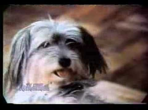 Classic Chuck Wagon Dog Food Commercial Youtube You Know What