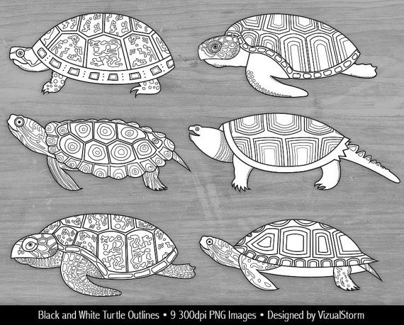 Hand Drawn Turtle Outlines Clipart Black And White Turtles For