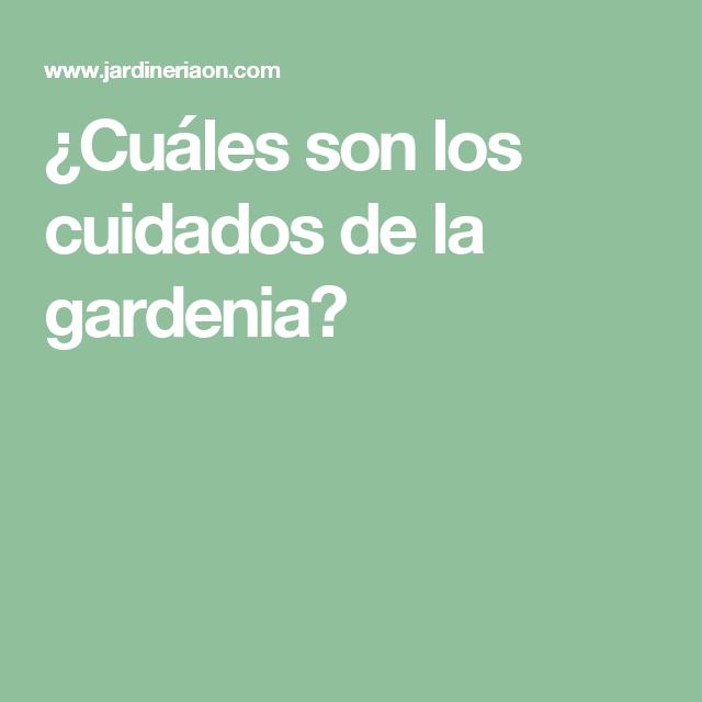 cuáles son los cuidados de la gardenia? | plantas | pinterest