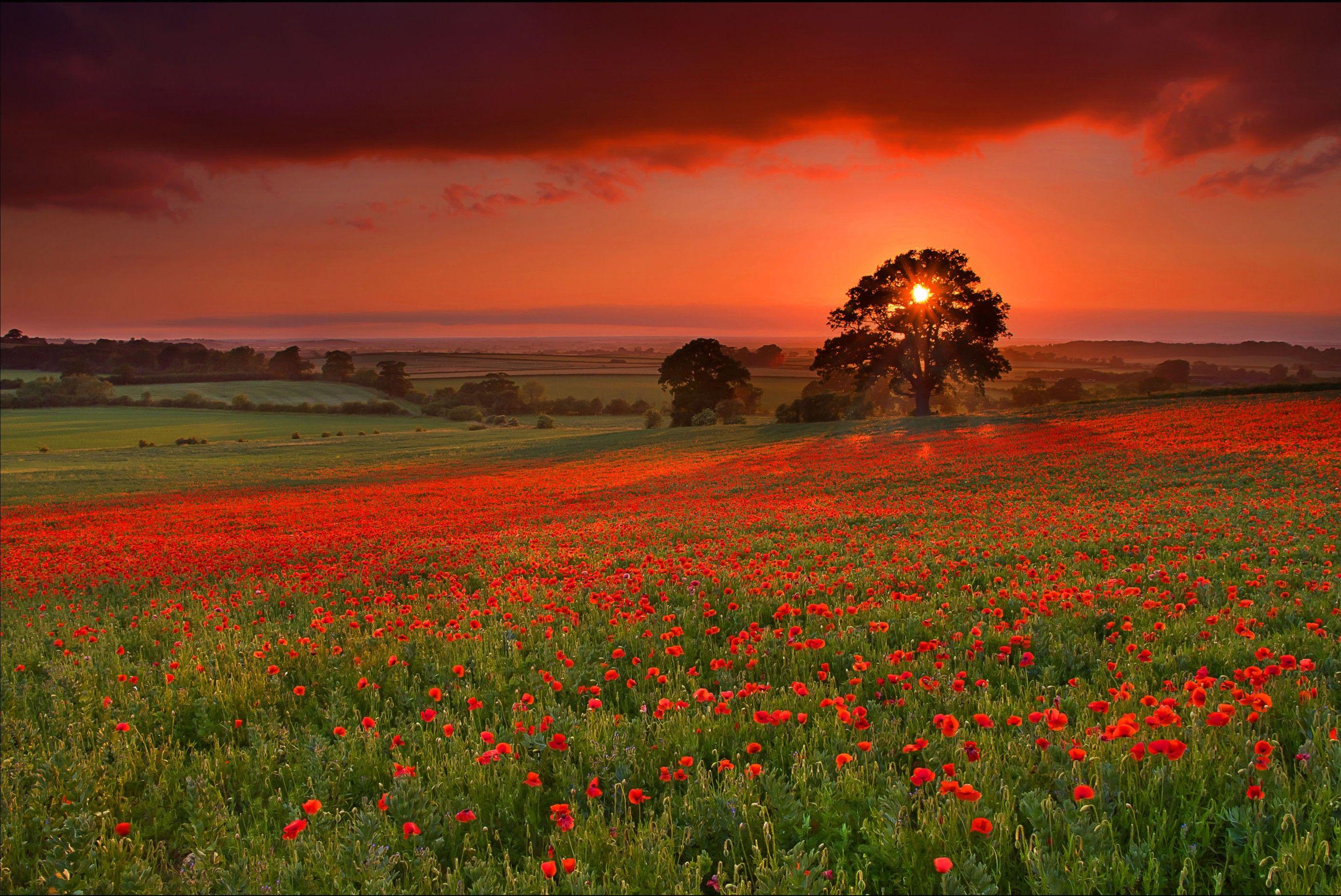 Epingle Par Melanie Lataste Sur Nature Et Beaute Paysage Rouge Paysage Fond Ecran Hd