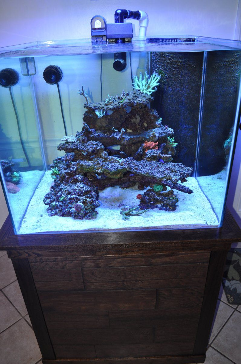 Click This Image To Show The Full Size Version Saltwater Aquarium Fish Saltwater Tank Saltwater Aquarium Setup