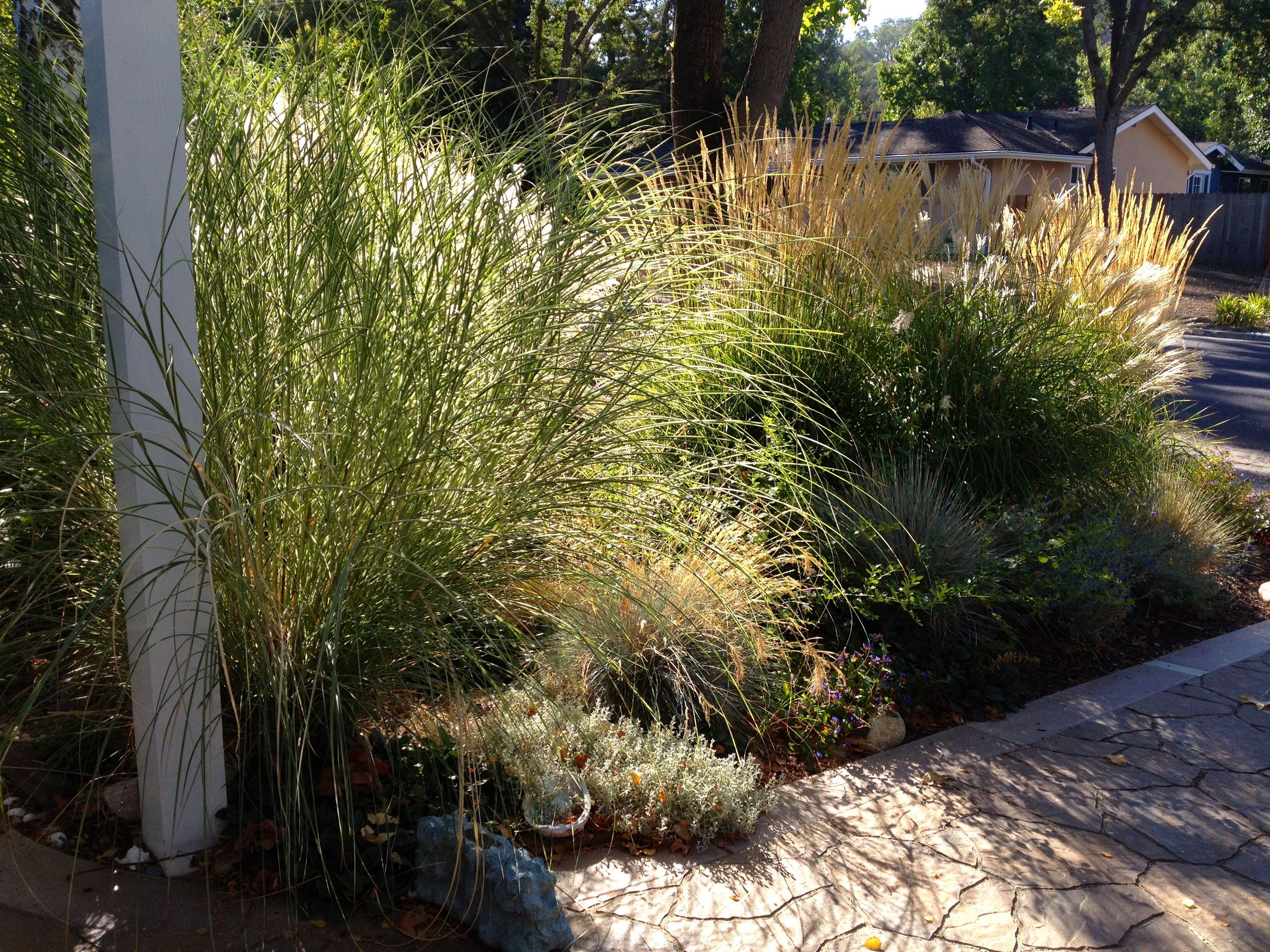 Grasses garden front walkway walkway yard