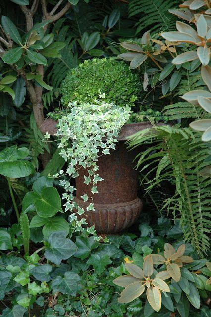 HAVETID: Gråbladede stauder og hvide blomster.