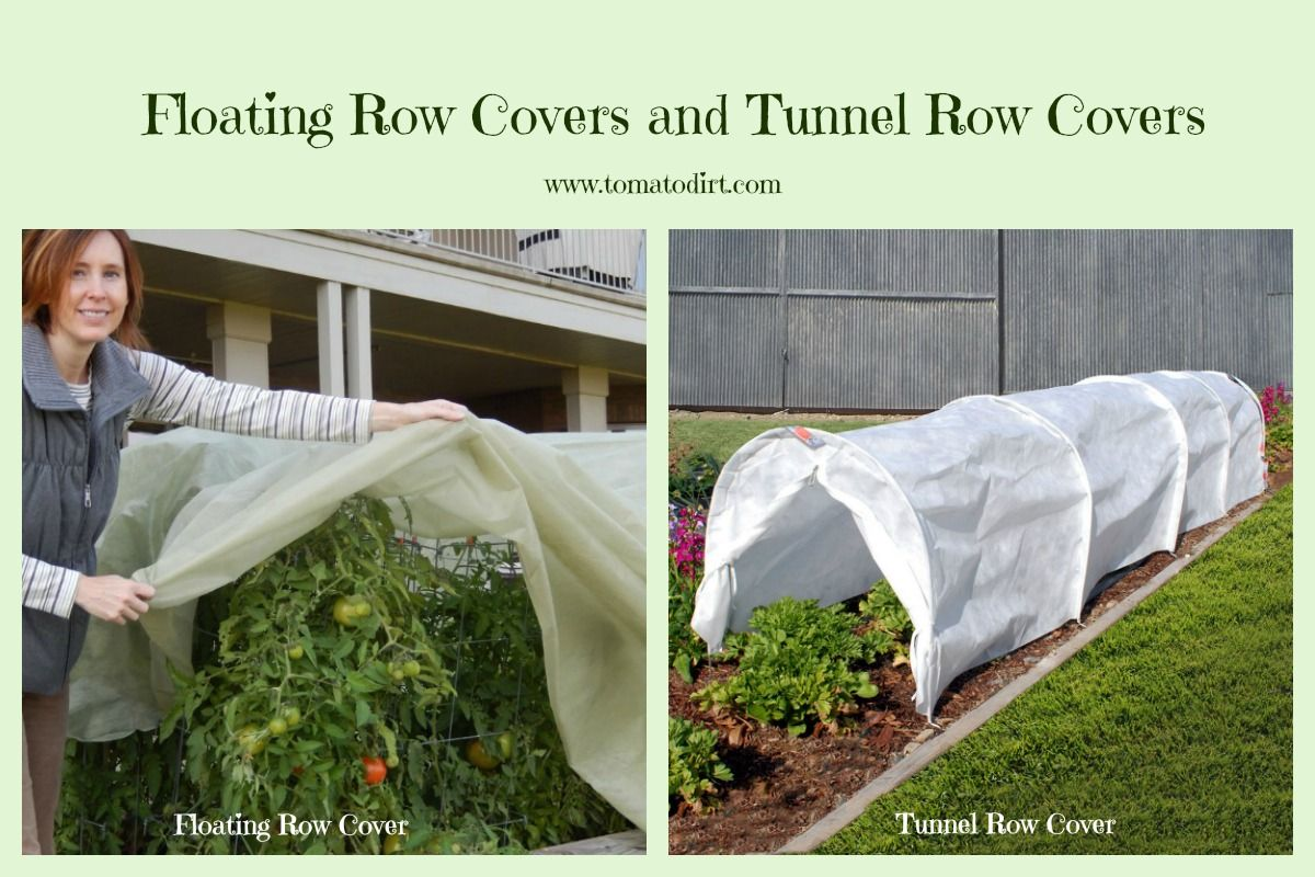 Floating Row Covers And Tunnel Row Covers For Protecting Tomatoes