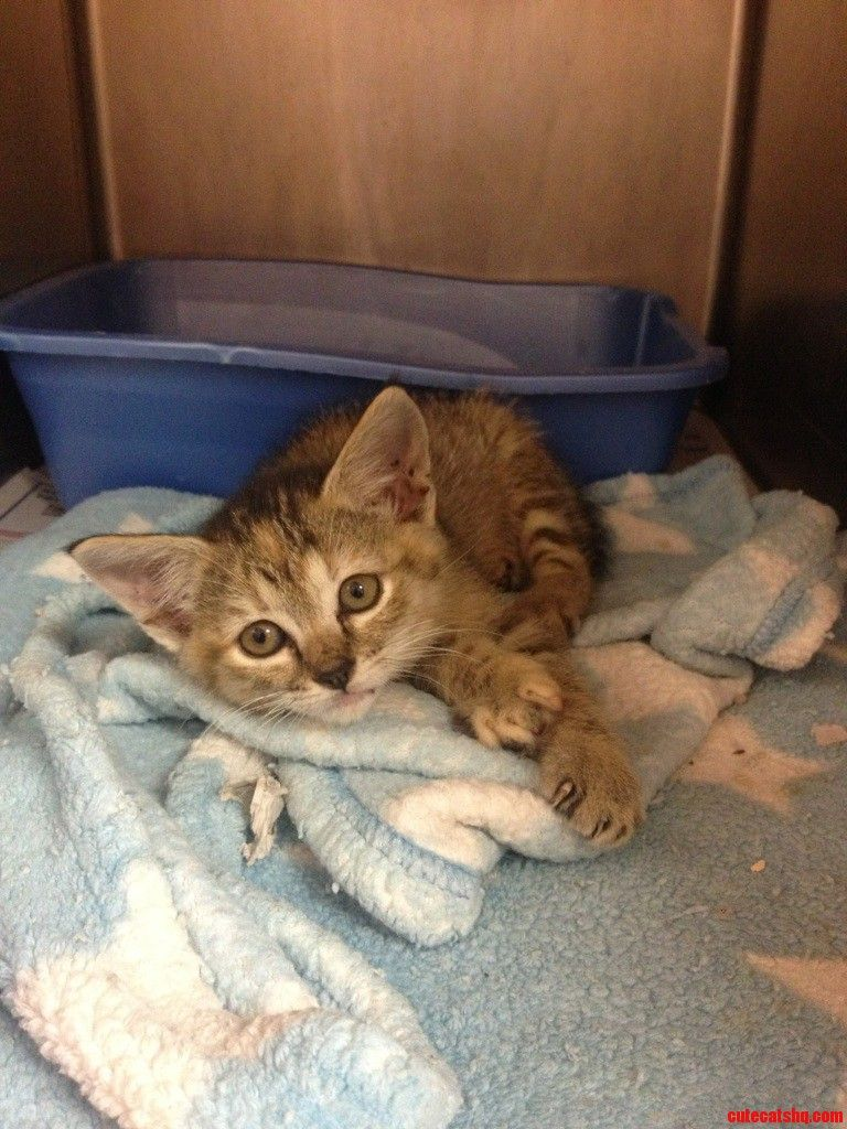 Was Able To Get This Beauty From The Spca Today. - http://cutecatshq.com/cats/was-able-to-get-this-beauty-from-the-spca-today/