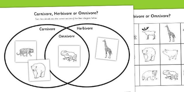 Omnivore carnivore or herbivore venn diagram sorting worksheet omnivore carnivore or herbivore venn diagram sorting activity sheet ccuart Images