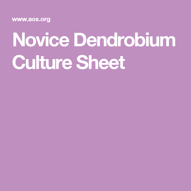 novice dendrobium culture sheet orchid growing pinterest orchid and plants