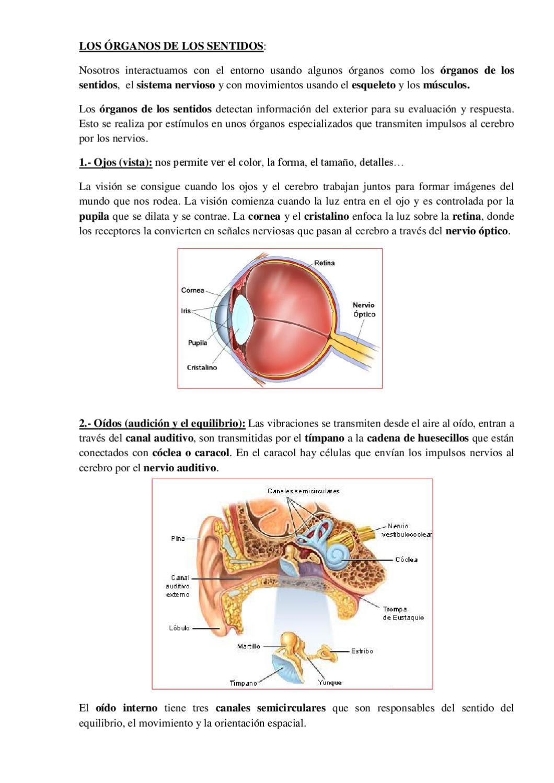 LOS SENTIDOS. Español | Cuerpo humano, Cuerpo y Natural