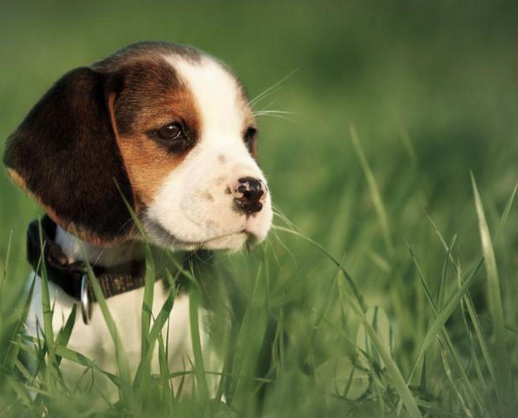 Puppy adventure.