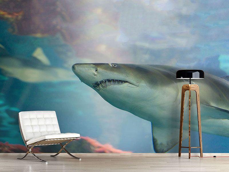 Fototapete Badezimmer ~ 8 besten fototapeten fische bilder auf pinterest fische