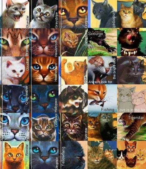 Alot Of Cats Lol Warrior Cats Warrior Cats Books Warrior Cats Art