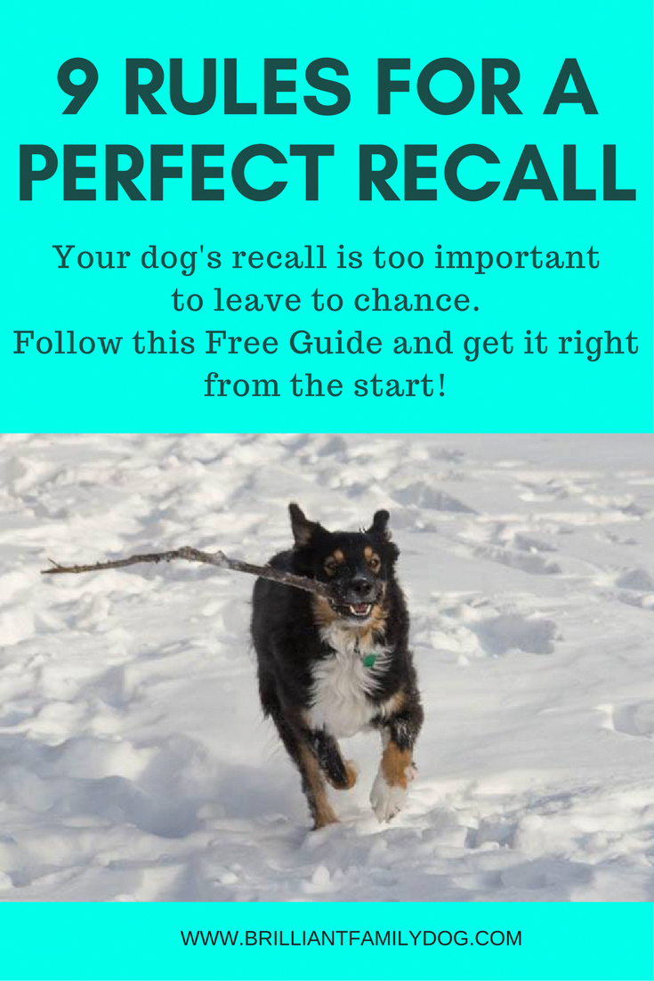 Get Your Free Download And Get A Fast And Instant Recall From Your Dog Read The Post Dog Recall Dog Recall Training Dog Training Books