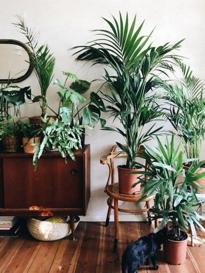 Photo of 19 Houseplants that Can Survive Urban Apartments