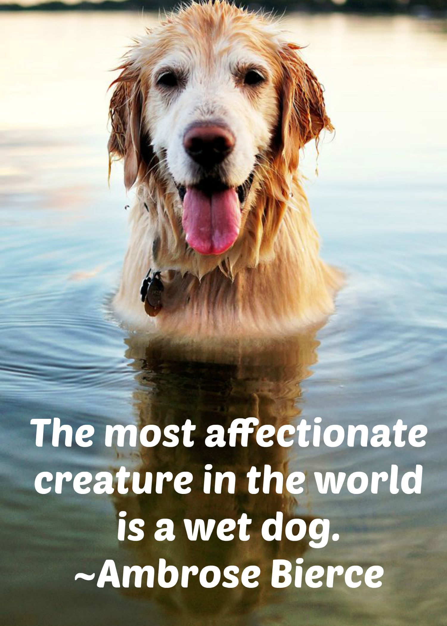 Quotes About Pets And Friendship A Wet Dog Is The Most Affectionate Creature Pet Pets Quote