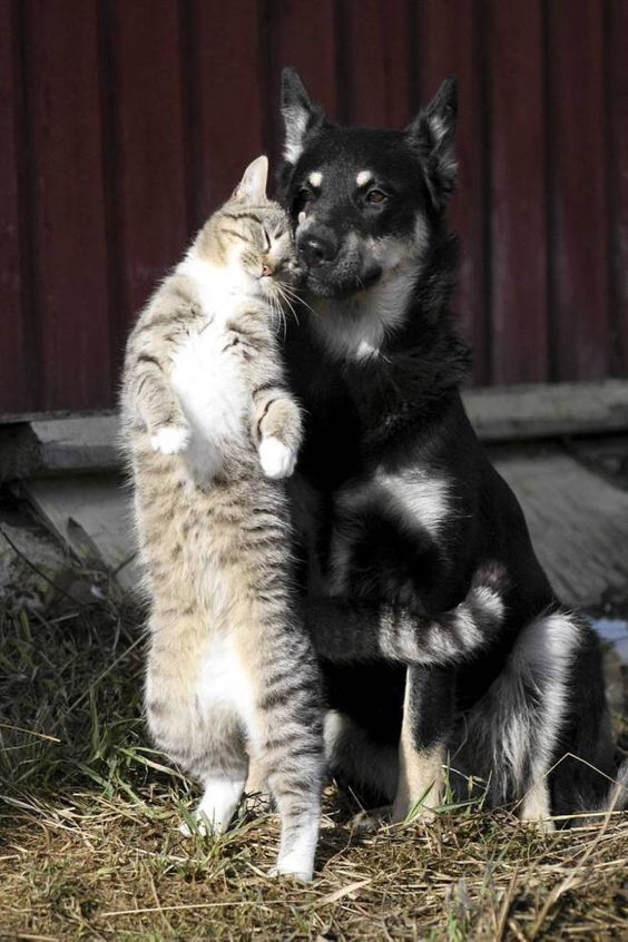Introducing Your Cat To A Dog? - CatTime